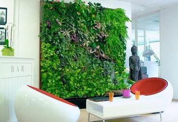 зеленая стена в кафе