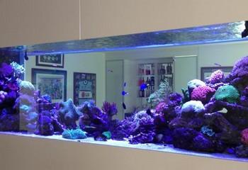псевдоморской аквариум в виде перегородки