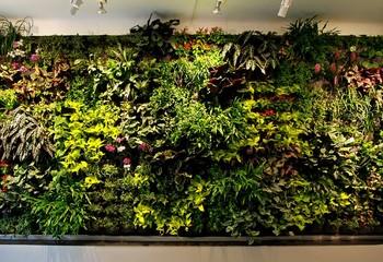 вертикальный сад из разных растений