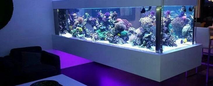 аквариум псевдоморе в интерьере