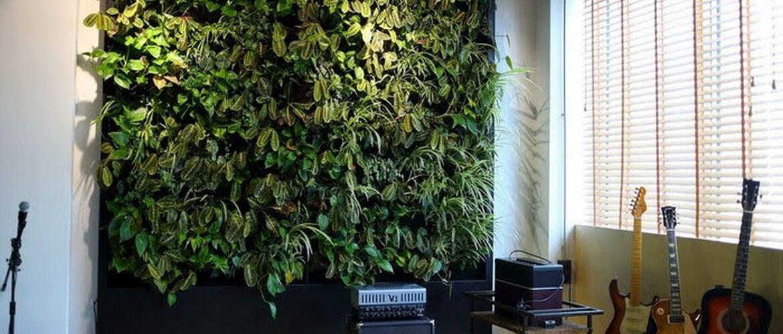 зеленая стена растительная